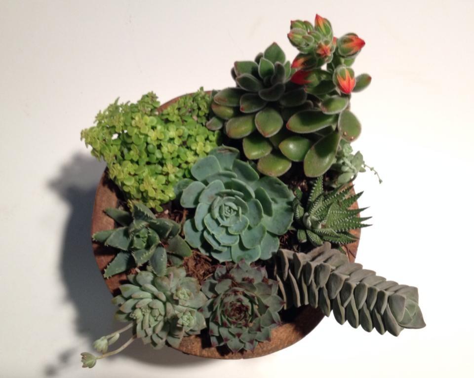 Maceta de madera con plantas suculentas o cactus 250 - Como cuidar hortensias en maceta ...