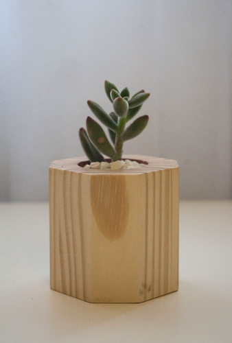 maceta de madera  prisma  de 5 cm de diámetro con suculenta