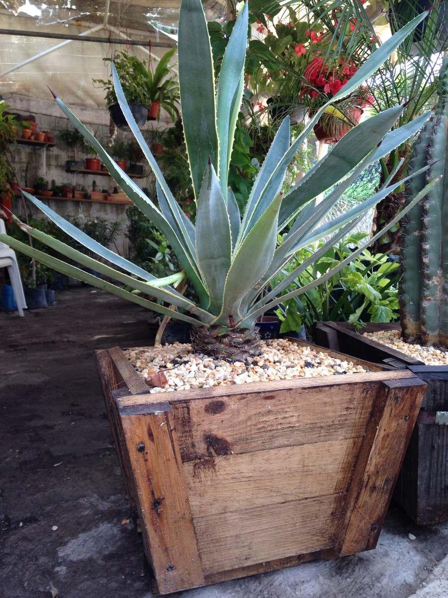 Maceta de madera tipo vintage cactus o plantas 280 - Maceta de madera ...