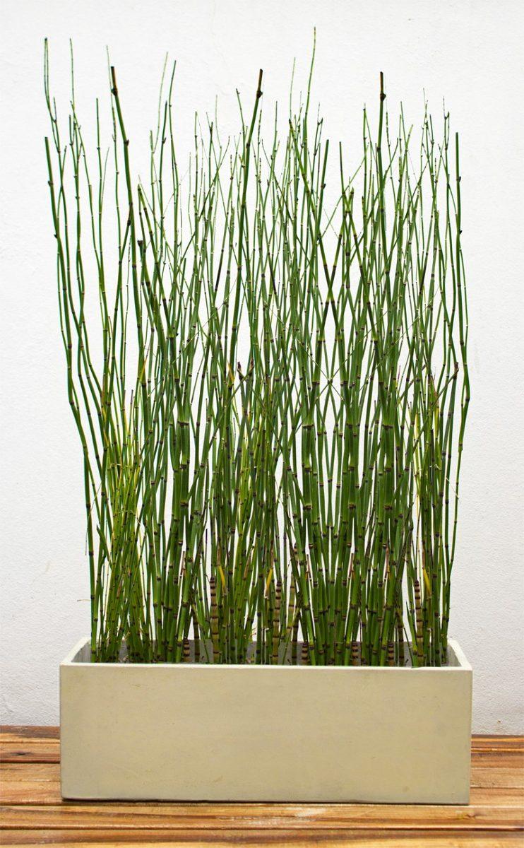 maceta jardinera xcm plantas para tu comercio balcn