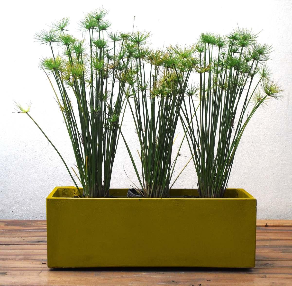 Maceta Jardinera 100x30x40 Con 5 Arbustos Para Exterior 186000 - Macetas-de-exterior