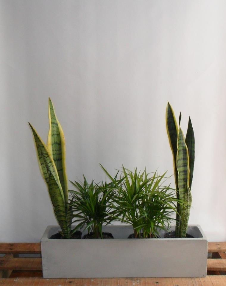 Maceta Jardinera Fibroemento 4 Plantas Set De Interior 460 - Jardinera-interior