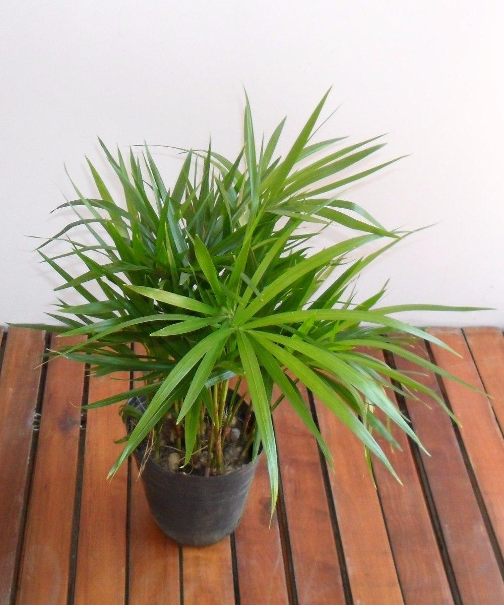 maceta jardinera fibroemento plantas set de interior