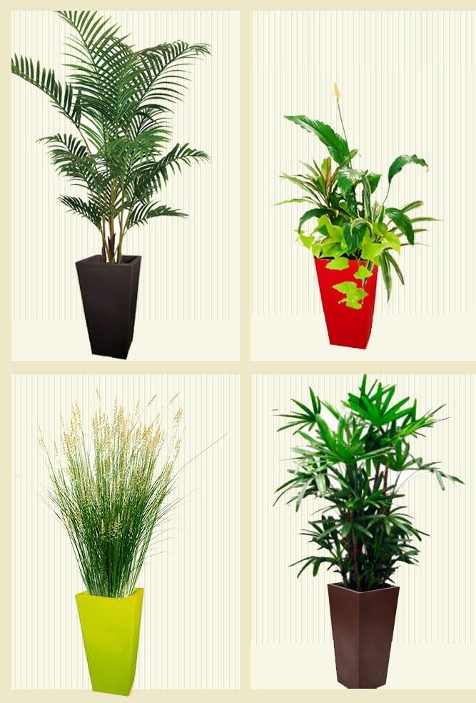 Plantas de interior y exterior envio gratis plantas de for Macetas plantas exterior