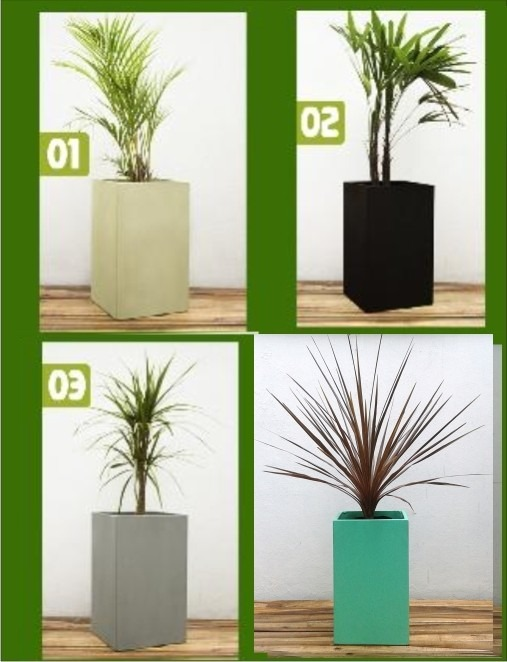 Plantas para macetas ideas originales para colocar tus for Macetas de interior