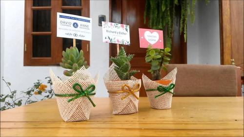 macetas con suculentas y cactus ! recuerdos en lima