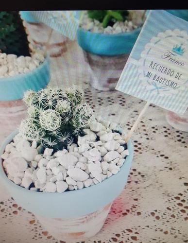 macetas consuculentas cactus ideal regalo empresarial