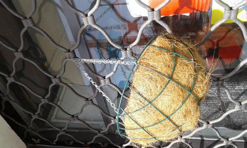 macetas de coco