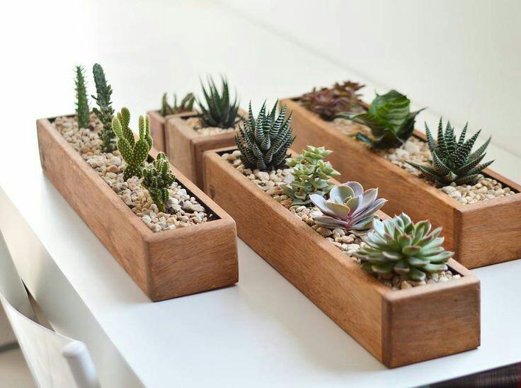 Macetas de madera para suculentas en mercado libre - Macetas de pared ...