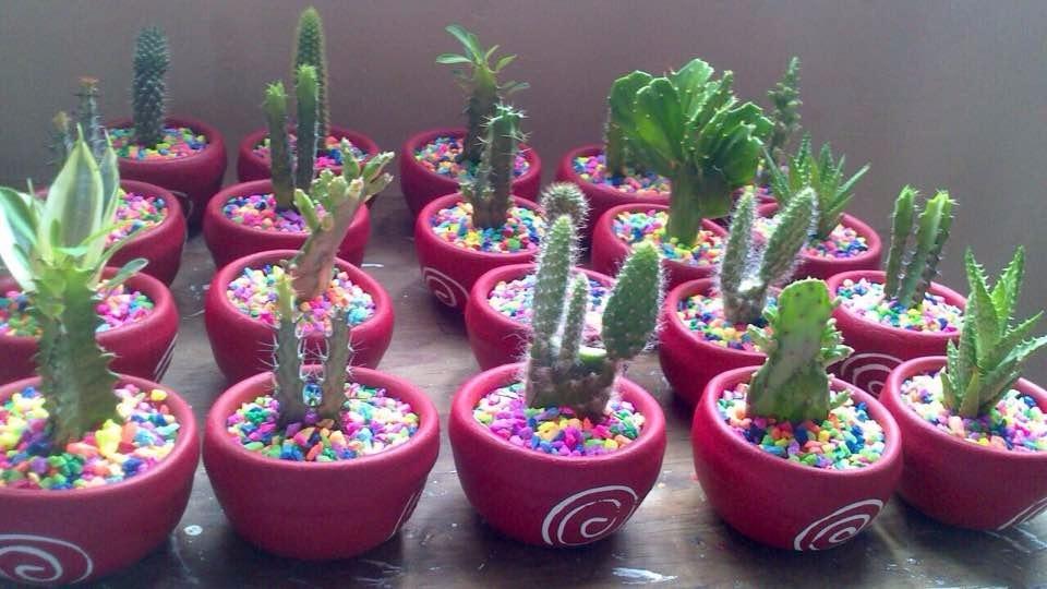 Macetas decoradas con cactus y suculentas para recuerdos for Macetas decoradas para jardin
