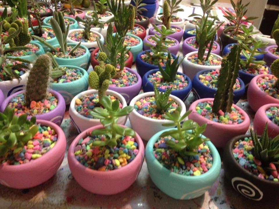 macetas decoradas con cactus y suculentas para recuerdos - $ 33.30