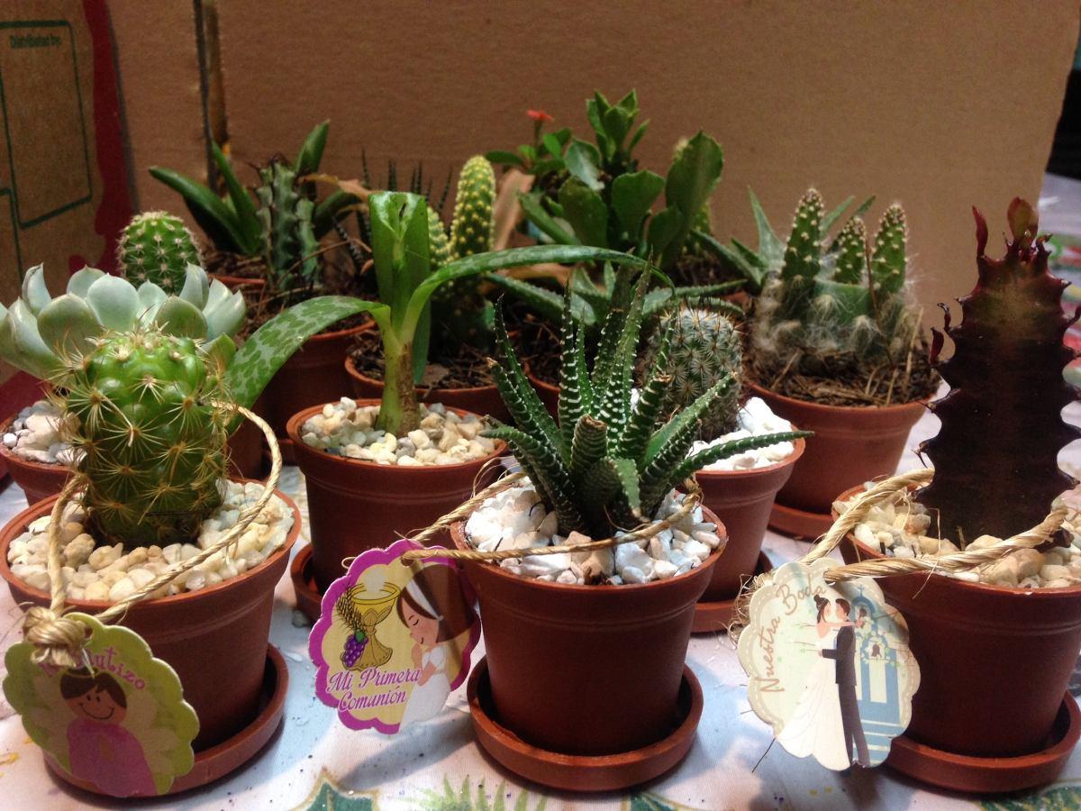 Macetas miniatura decoradas con cactus con suculentas for Macetas miniatura