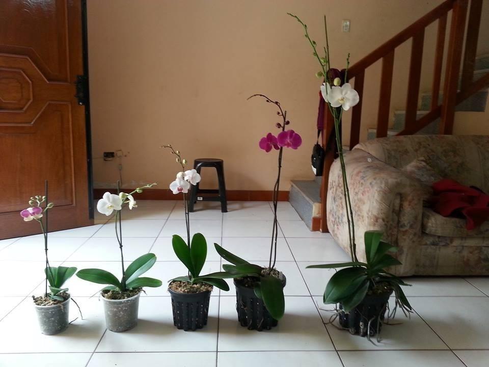 Macetas para orquideas s 5 00 en mercado libre - Macetas para pared ...