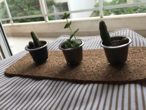 macetitas de diseño con mini cactus y suculentas