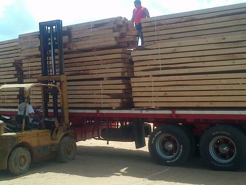 machihembrado de pino caribe precio de fabrica