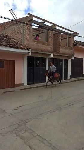 macho romo semi pony