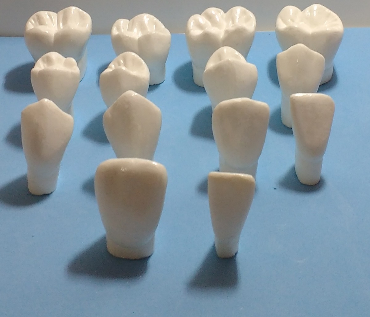 Macro Modelo Dentes Para Estudo 14 Dentes