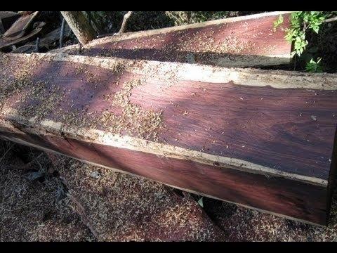 madera fina cedro caoba cocobolo katalox exportacion
