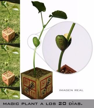 magic plant regalo san valentin novia te quiero te amo amor