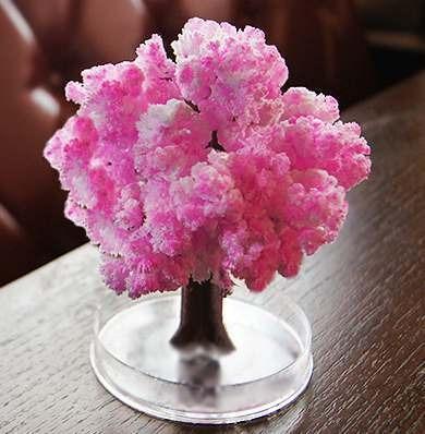 magic sakura (arbol de cerezos)
