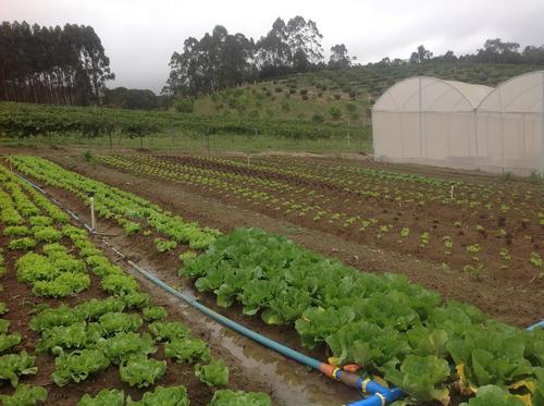 magnifica fazenda  produção de orgânicos em biritiba mirim