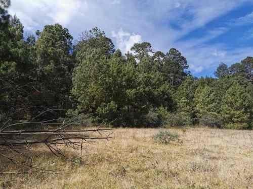 ¡magnifico terreno en zona tranquila, ideal para casa, rancho y/o cultivo!
