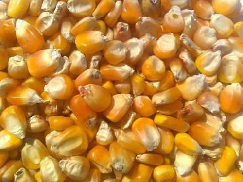 maiz entero bolsa de 2 kilos aprox.