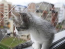 mallas de protección invisibles anticaídas niños mascotas
