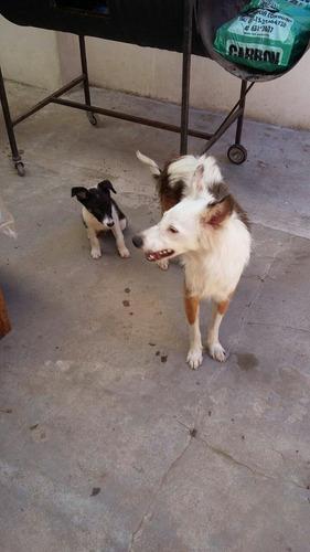 mama y cachorrito macho en adopcion rescatados del infierno