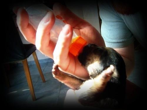 mamadera vidrio  75 ml  ideal cachorritos