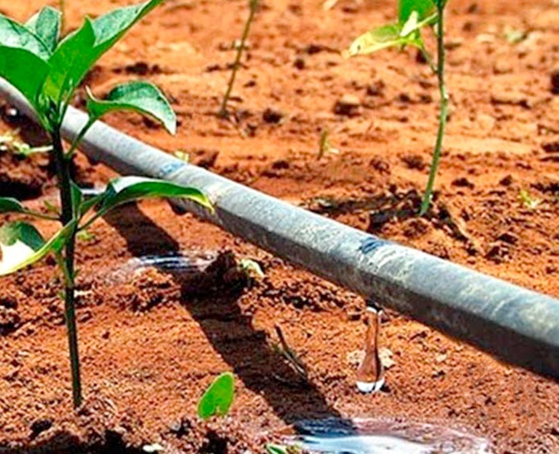 Resultado de imagem para irrigação por gotejamento