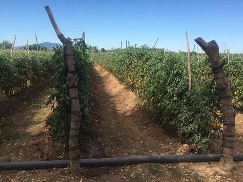 manguera plana agricola 4¨ sustituto de layflat oval riego