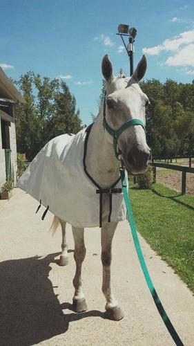 manta caballo arpillera y rafia