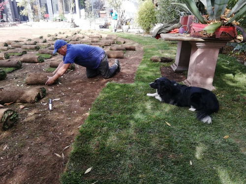 mantencion contruccion de jardines y riego automatico