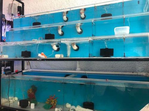 mantenimiento de acuarios