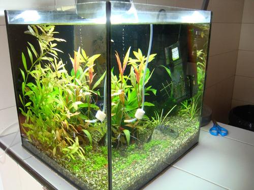 mantenimiento instalación y cuidado de acuarios y peceras