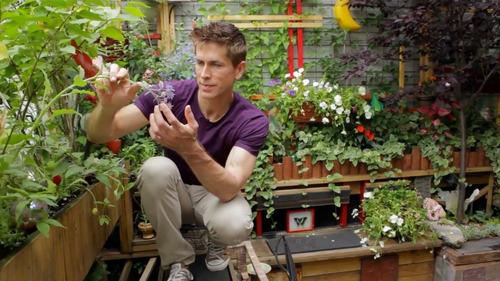 mantenimiento y paisajismo de jardines  | jardineros uba