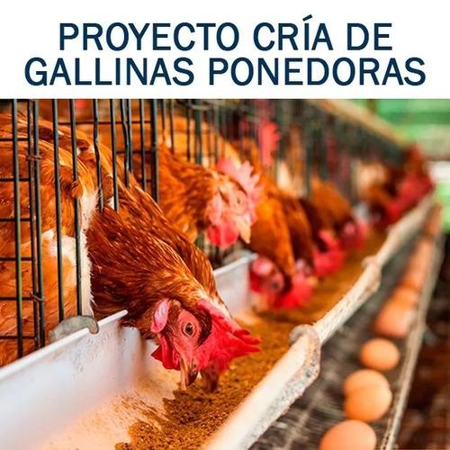 manual cría de gallinas ponedoras y pollos de engorde