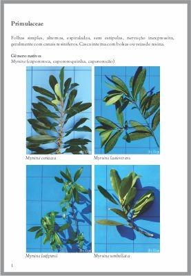 manual de dendrologia: o estudo das árvores