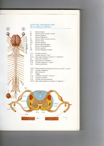 manual ilustrado de diagnostico neurologico - d. collins