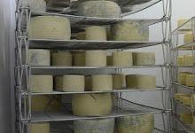 manual para elaboracion de quesos