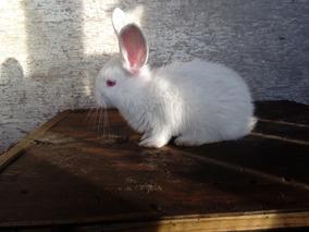 Deseas Conejos Como Para Manual Reproducción Los IYfyb7m6gv