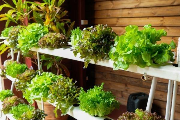 Manuales Cultivo Hidroponia En Casa Terrazas Balcones Jardin