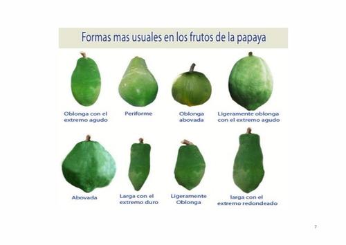 manuales para cultivo de lechoza paso a paso