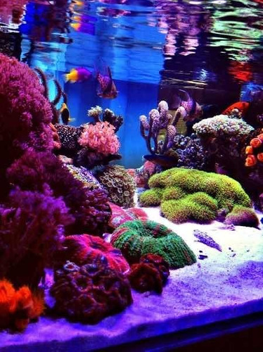 manutenção e consulta  técnica para aquarios marinhos e doce