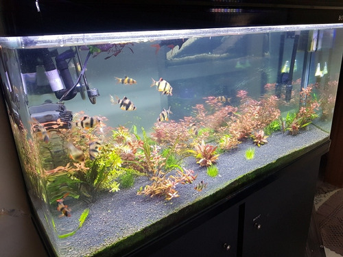 manutenção em aquário