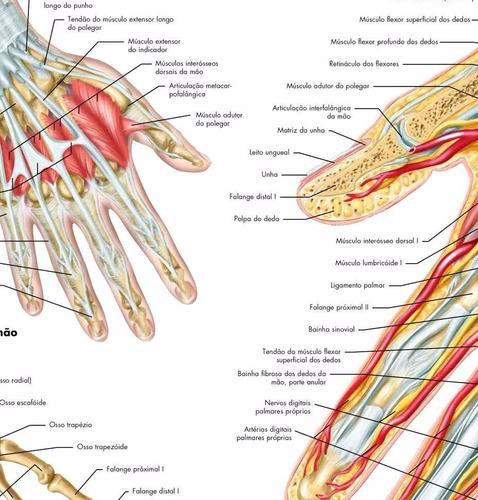 mapa mão punho anatomia 65x100cm medicina para fazer quadro