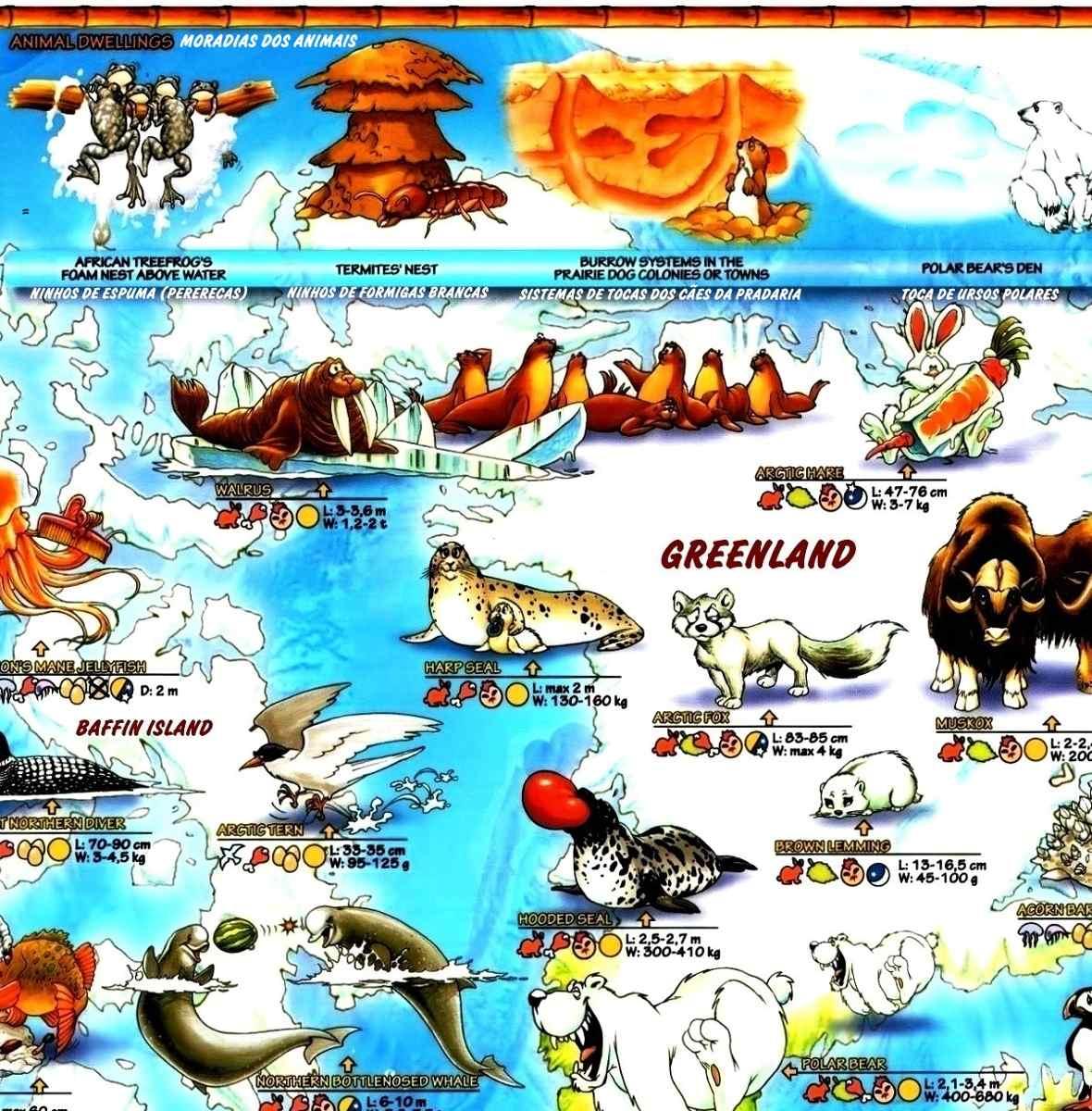 Mapa Mundi Ilustrado Mundo Animais Espcies Caractersticas  R