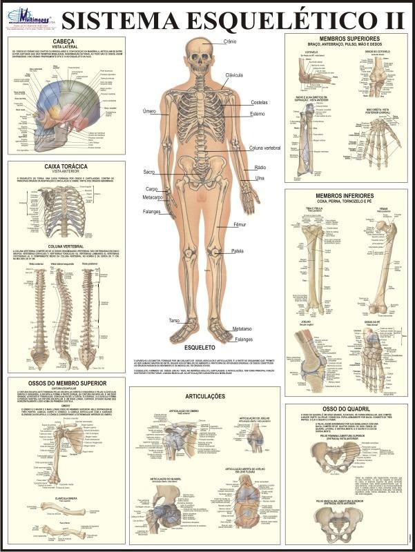 Dorable Anatomía Juegos Sistema Esquelético Fotos - Anatomía de Las ...