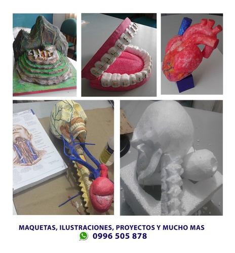 maquetas anatomicas en 3d, proyectos, ilustraciones